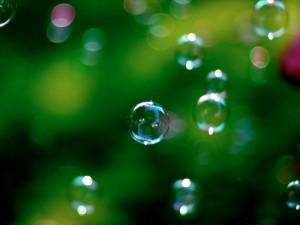 Croxfest bubbles